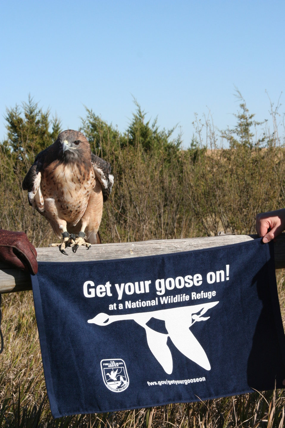 Get Your Goose On! - Raptor Style!
