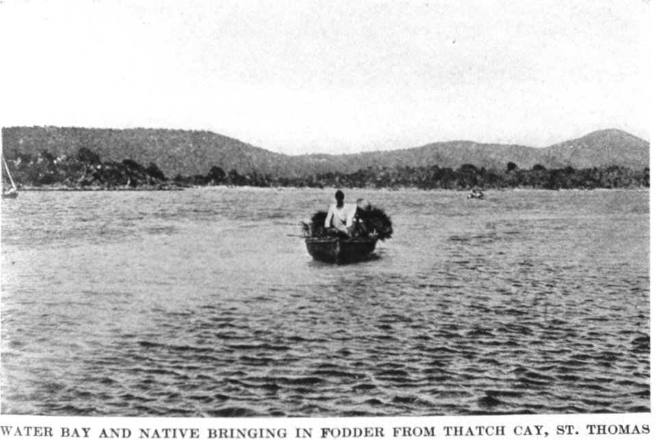 'Water Bay and Native Bringing in Fodder from Thatch Cay, St. Thomas.'  In: 'The Virgin Islands Our New Possessions and the British Islands', by Theodoor De Booy and John T. Faris, 1918.  J. B. Lippincott and Company, Philadelphia.  P. 40.  Library C
