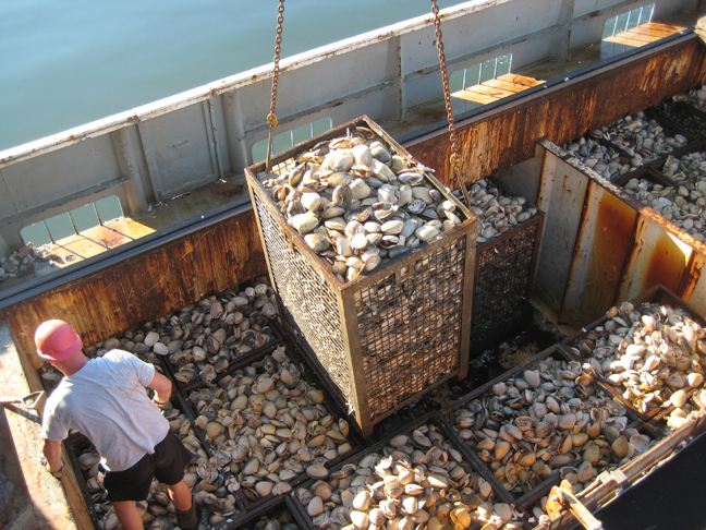Clam Harvest: Testing at Sea