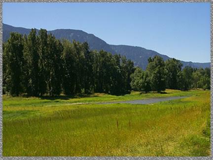 Grasslands - Pierce NWR