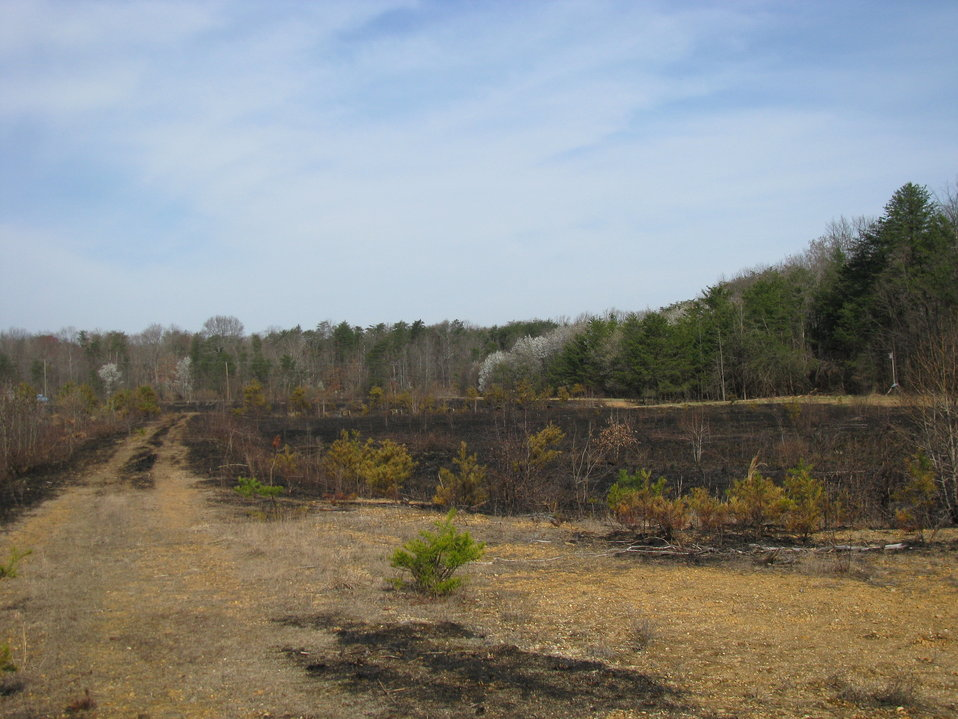 Grassland Field after Controlled Burn