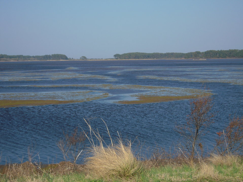 Marsh at Chincoteague National Wildlife Refuge (VA)