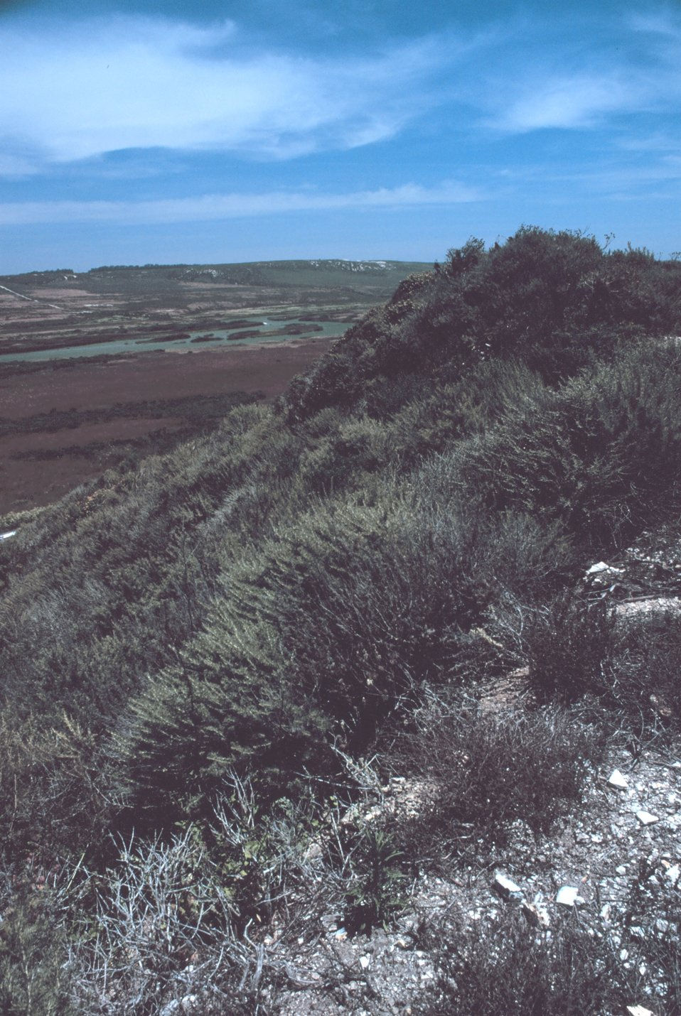 A vegetation covered dune and coastal wetlands near Vandenburg AFB