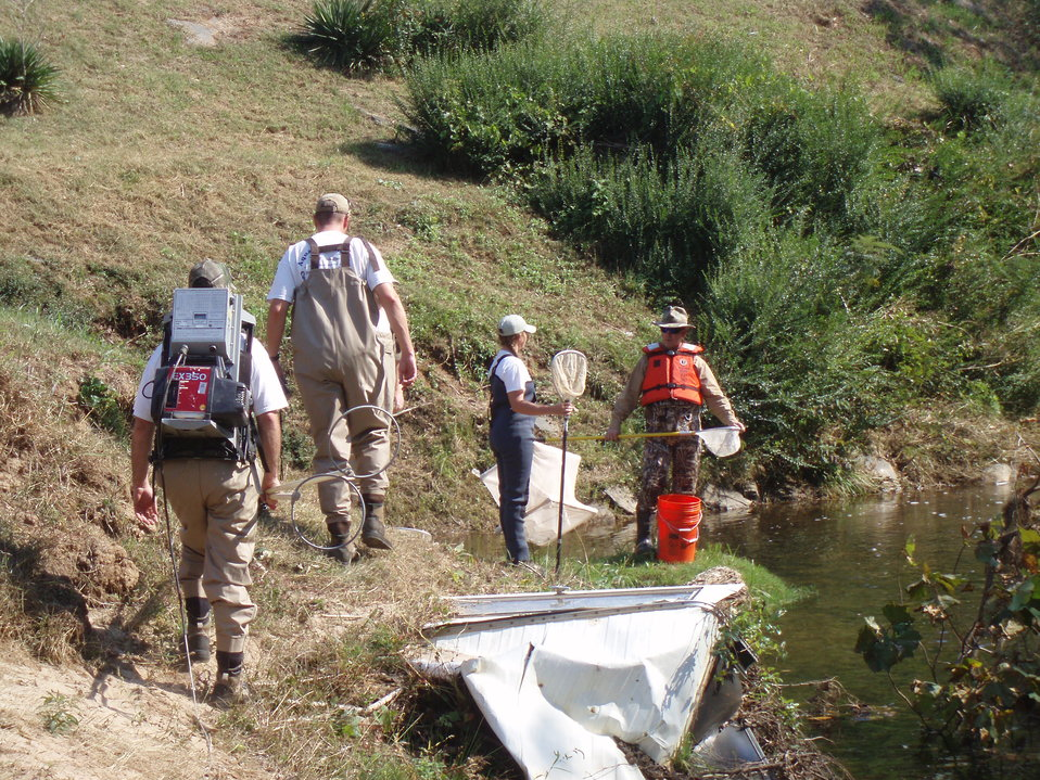 Electrofishing survey on the Pigg River