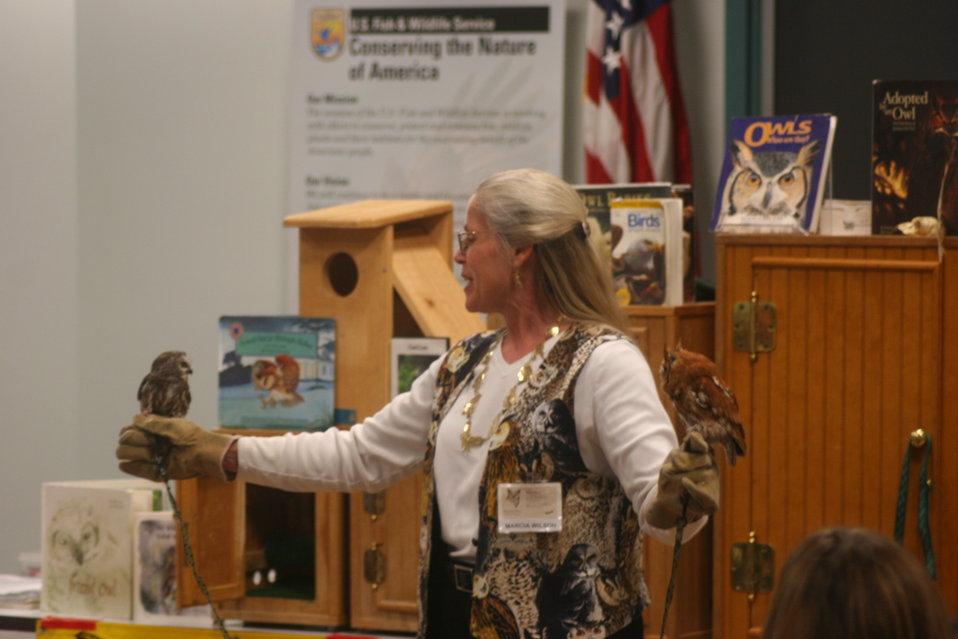 Screech Owl and Saw Whet Owl