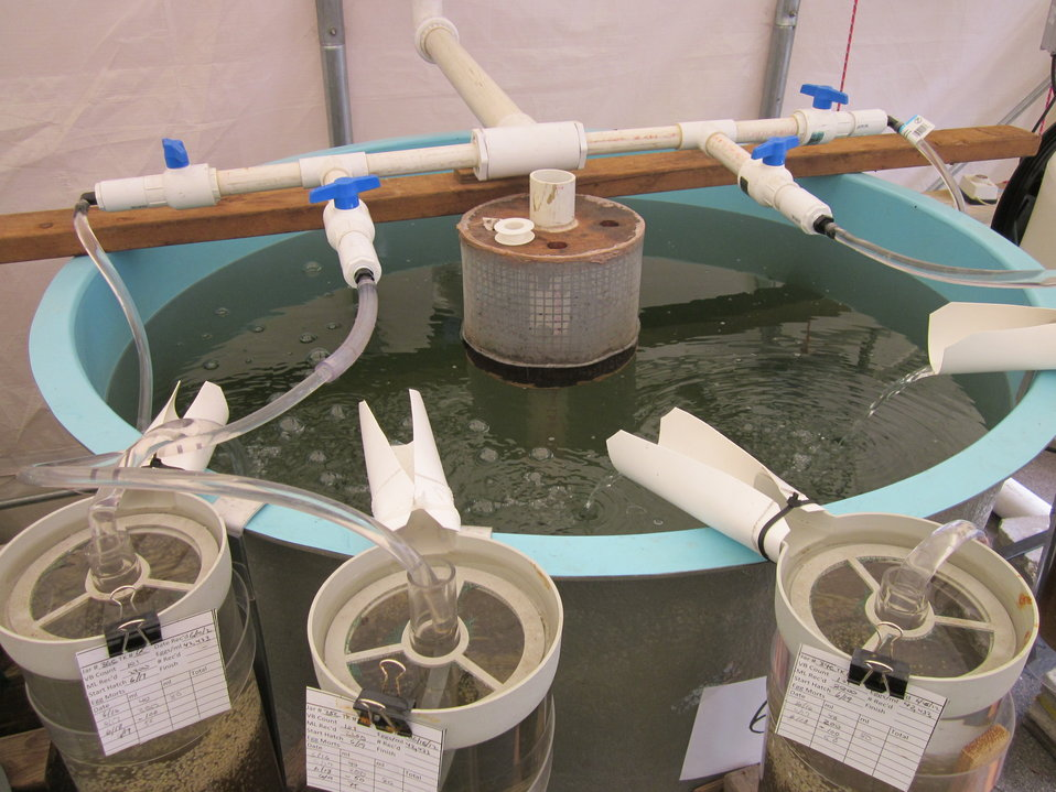 Water slides for shad larvae