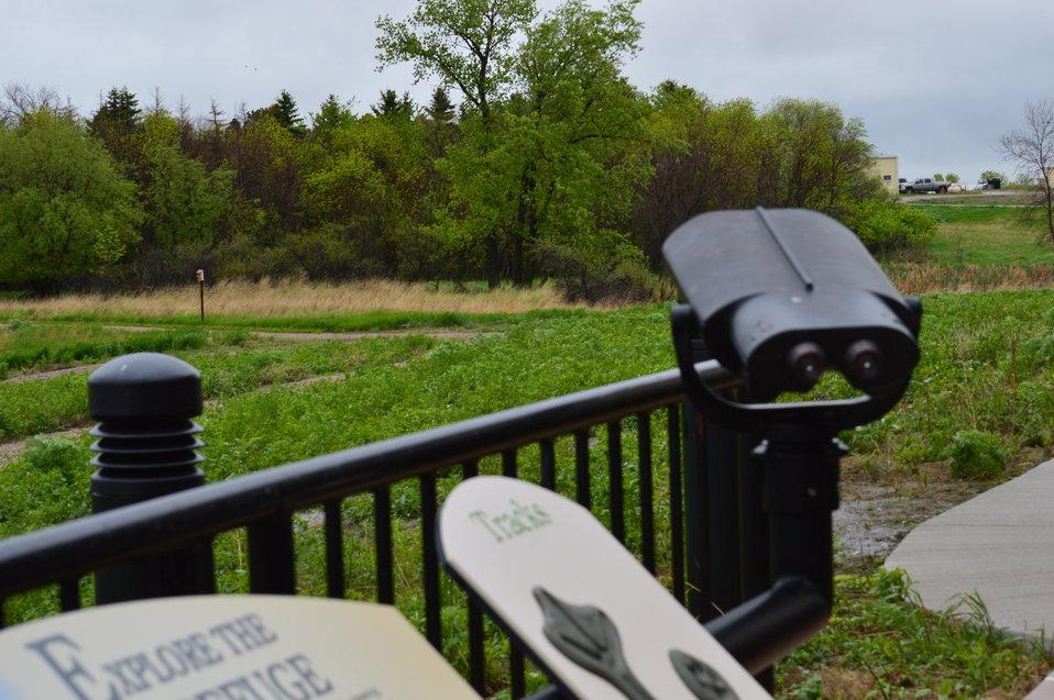 Binoculars for viewing wildlife