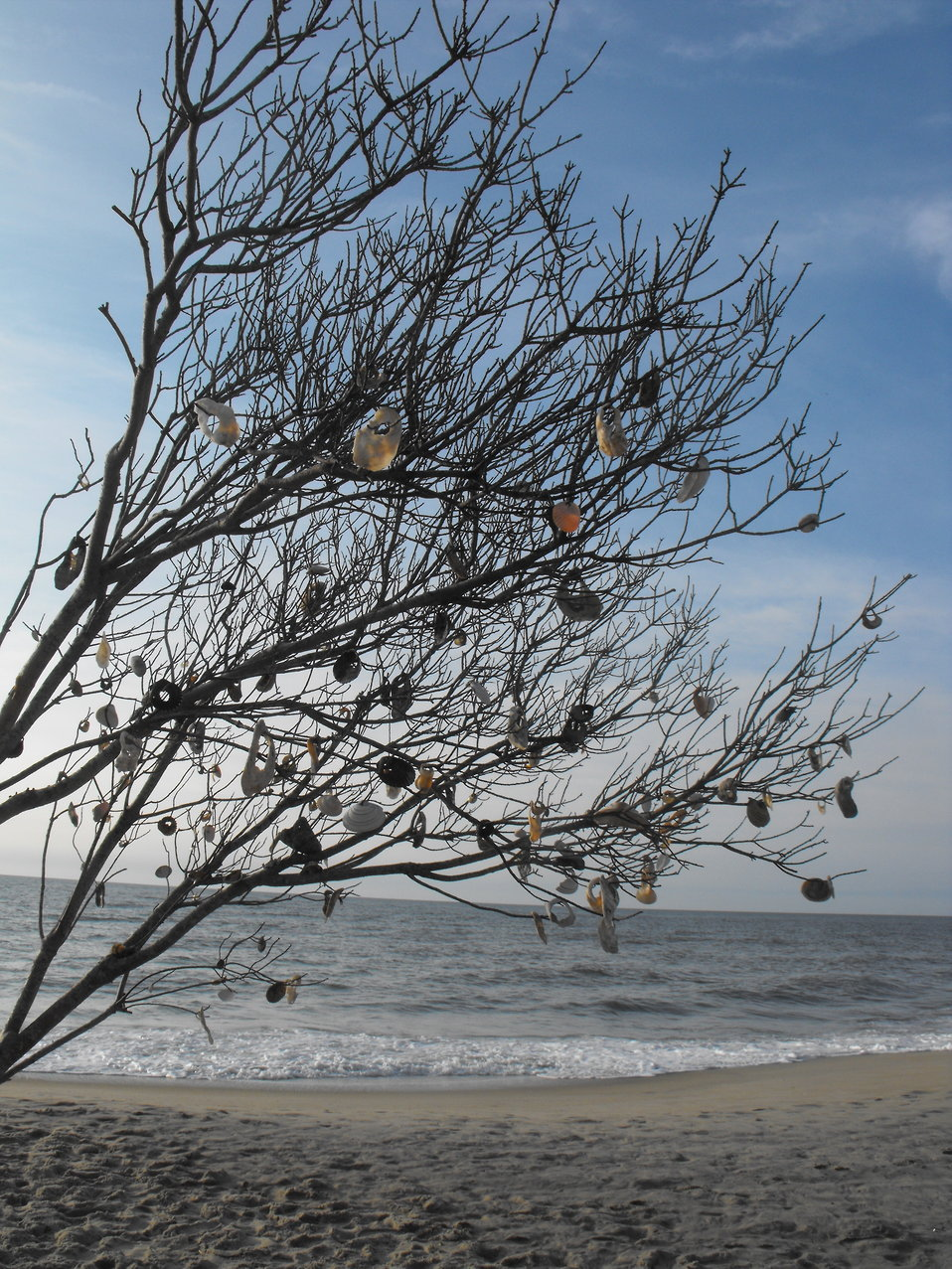 Photo of the Week - Shell Tree at Chincoteague National Wildlife Refuge, Virginia