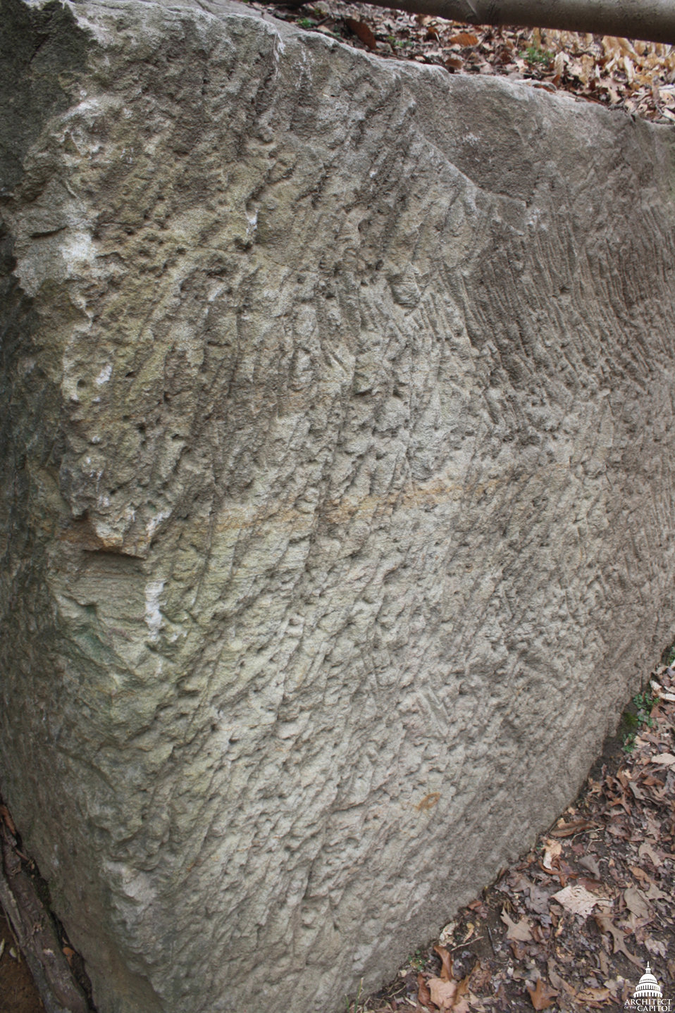 Tool marks visible in stone at Government Island