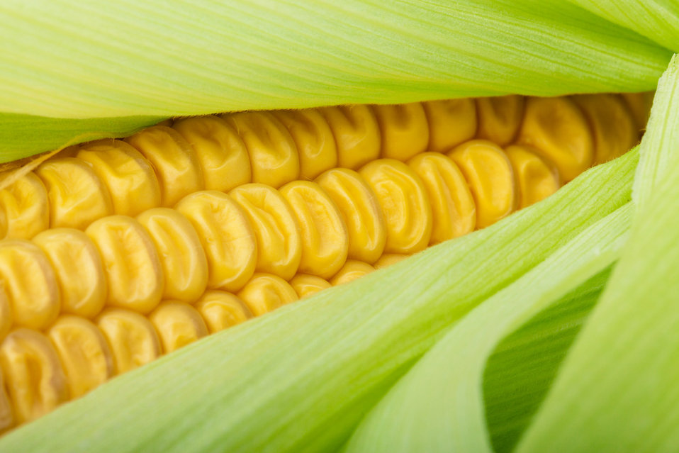 Fresh corn detail