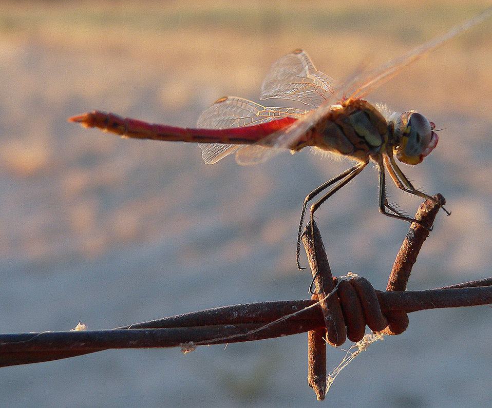 Dragonfly and wire