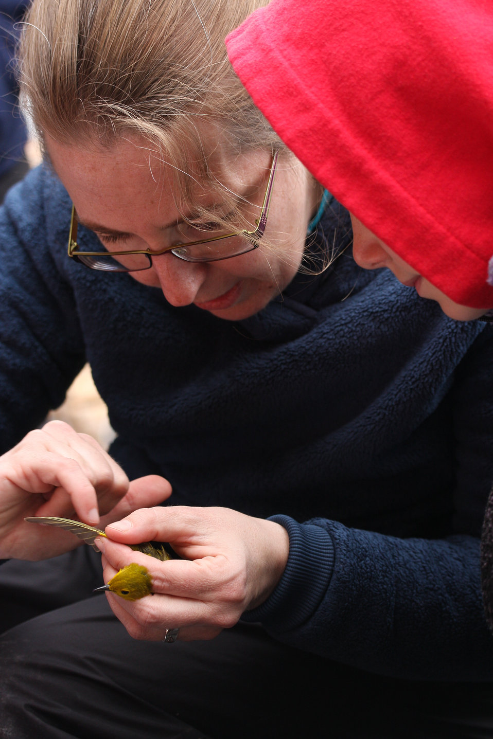 Volunteer Cindy Trussell demonstrates how to identify a warbler