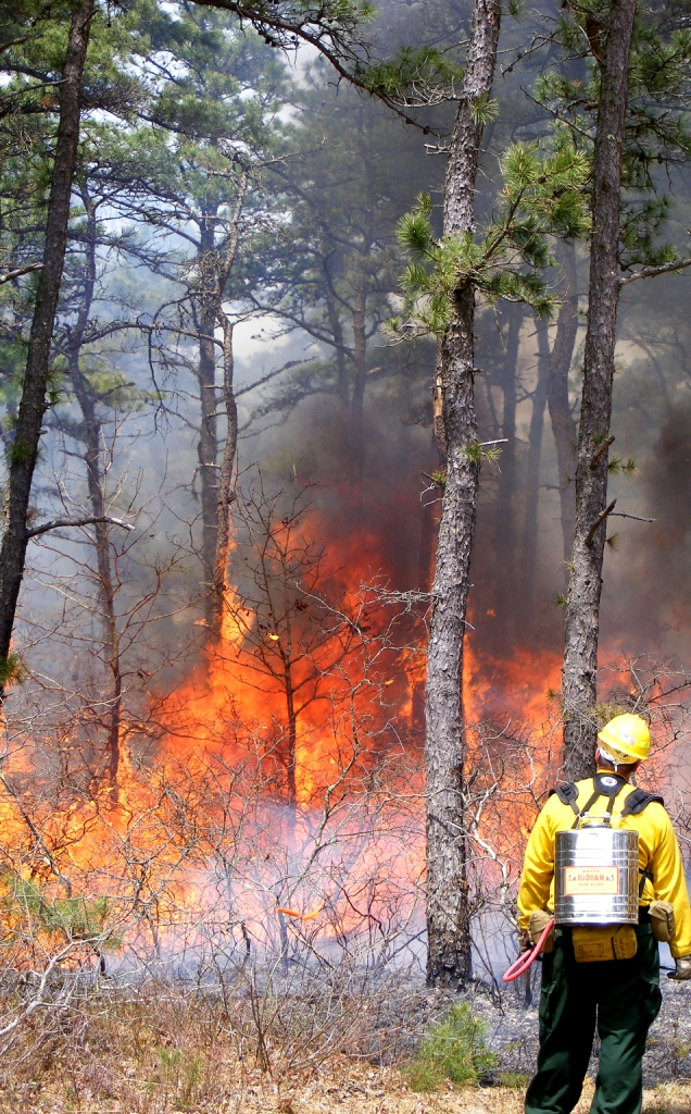 Prescribed fire, April 2010