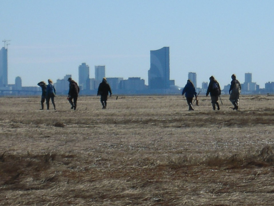 Salt Marsh field work