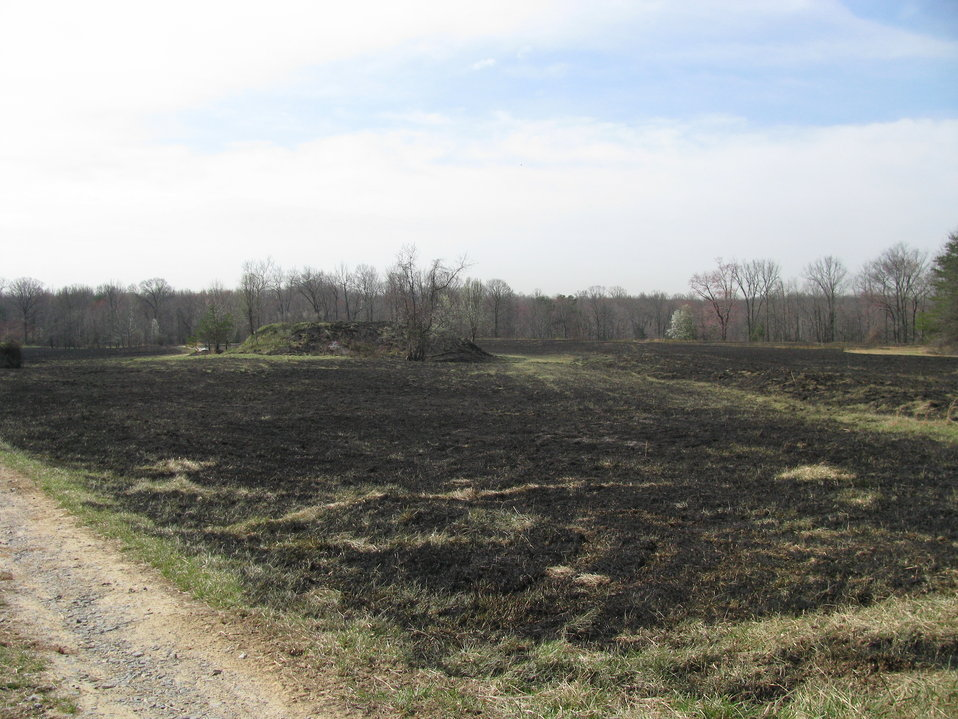 Controlled Burn Maintains Field