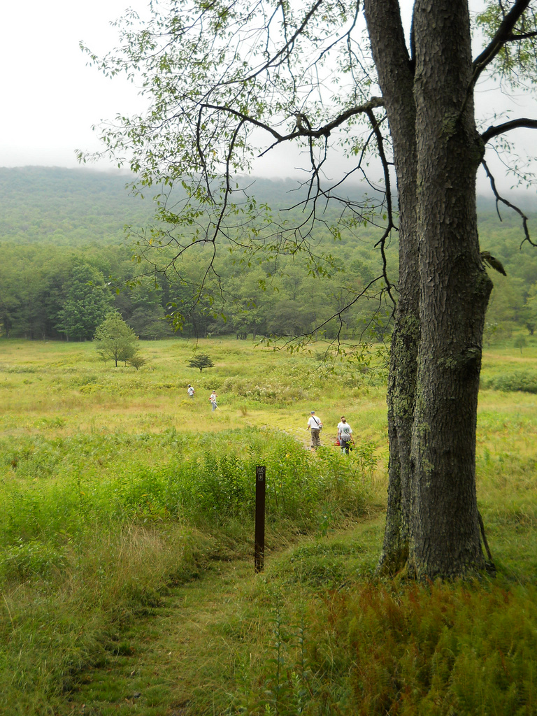 Canaan Valley Trail
