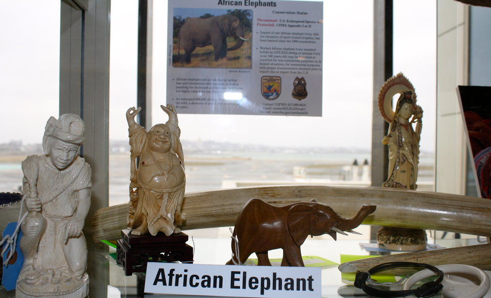 Elephant Ivory Carvings