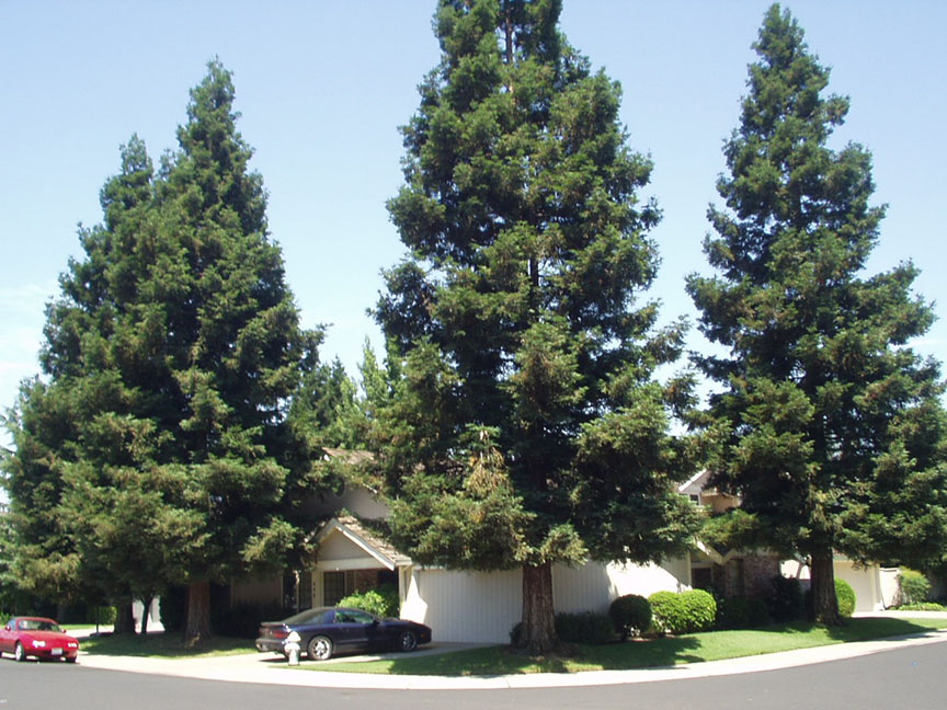 House; Trees