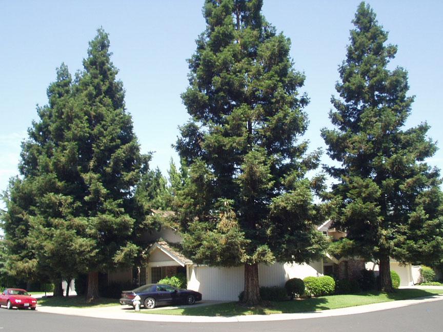 House; Trees