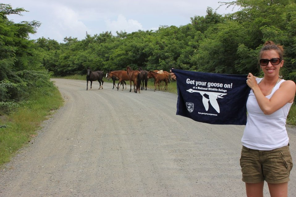 Wild Horses on Vieques National Wildlife Refuge