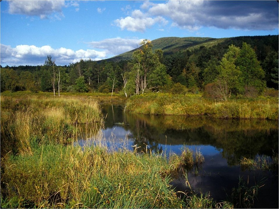Catskills Mountains and freshwater marsh, NY