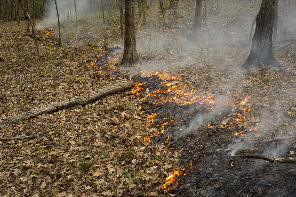 Piedmont C26 Prescribed Fire