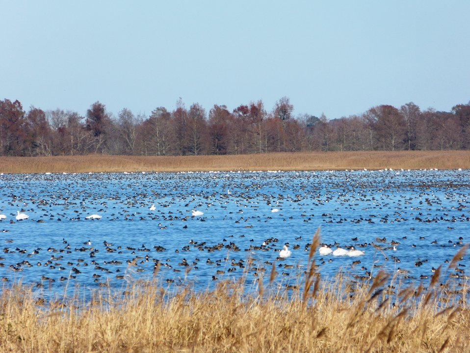 Birds, birds, birds on the lake