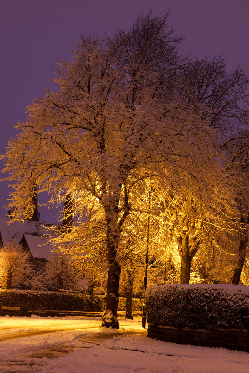 Snow covered tree at night