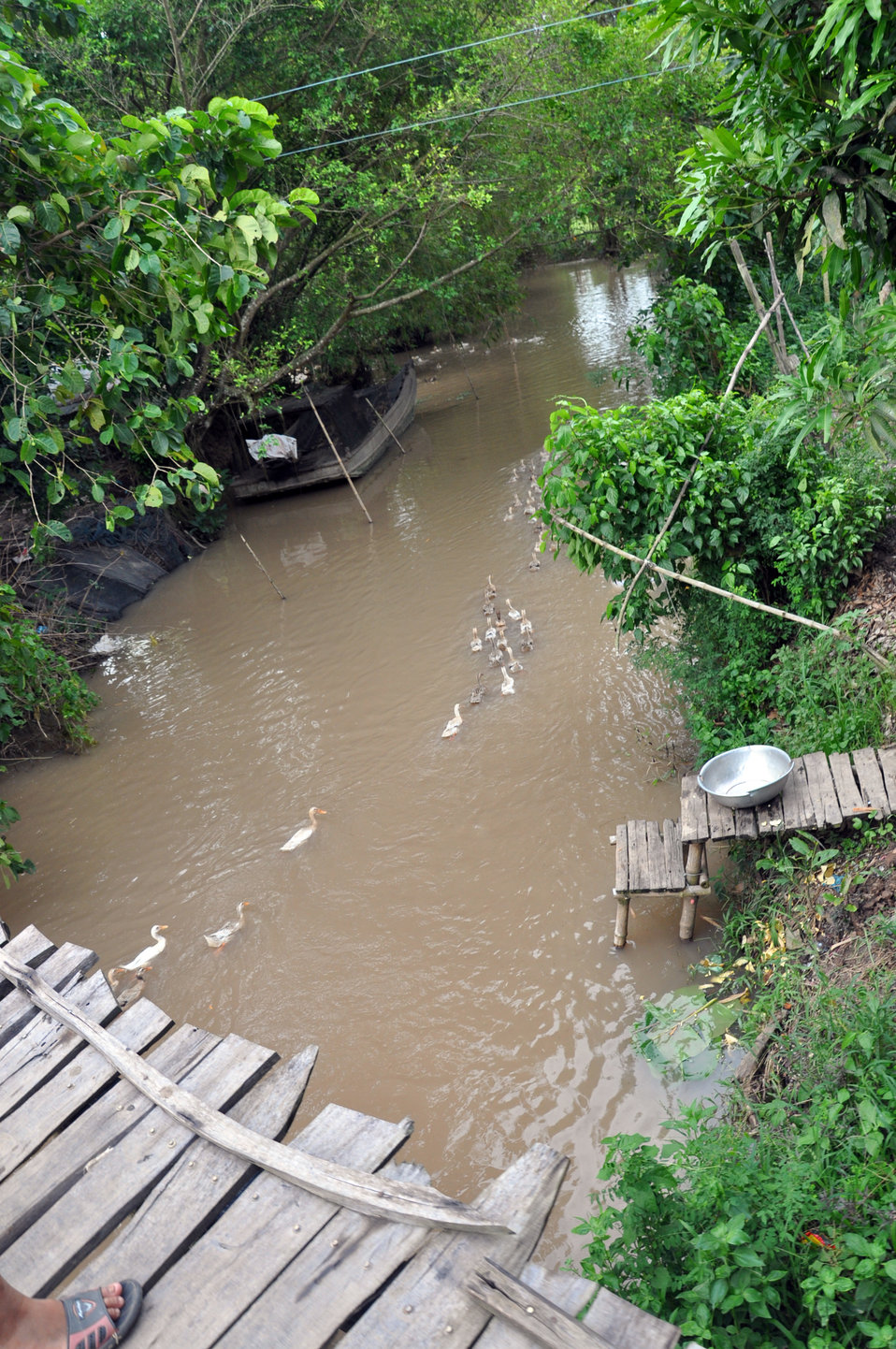 Ducks paddle downstream in Vietnam's Mekong Delta