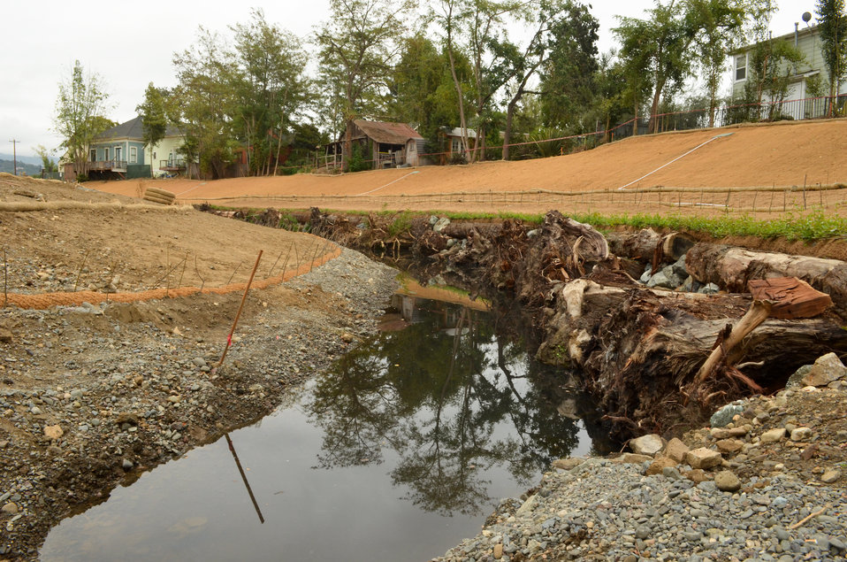 Tree trunks for fish habitat in Napa Creek
