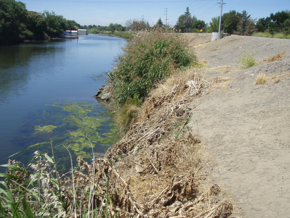 Levee erosion in the Stockton area