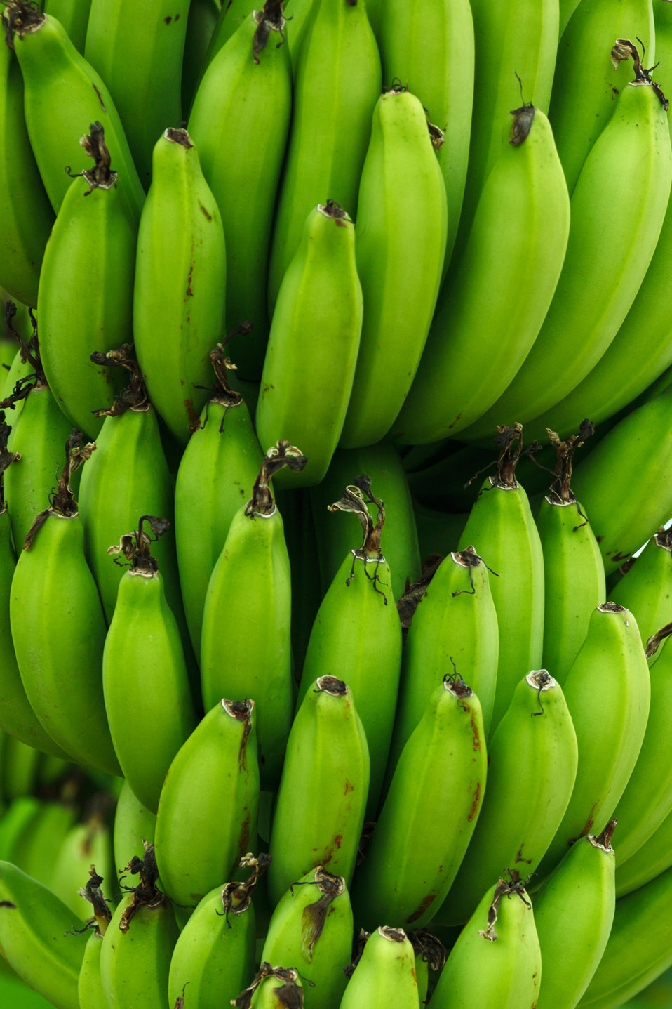 Green bananas background