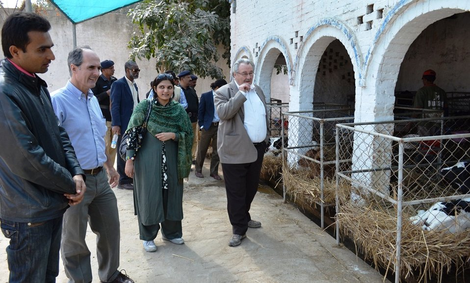 USAID Punjab team taking a tour of the Nestle Sarsabz demonstration dairy farm in Okara, where USAID-DRDF Dairy Project's farmer trainings are held.