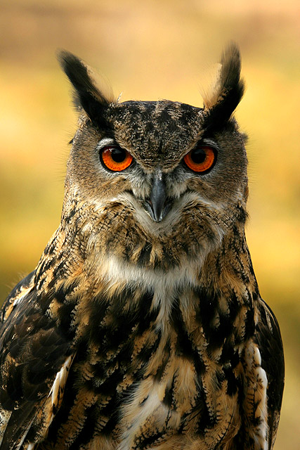 Uploaded by request of Jim Sapp