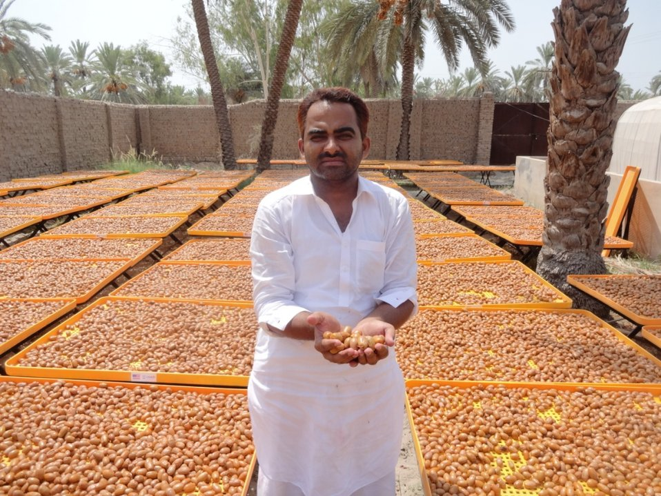 Dates Dost Program: Date farming and processing is a developing industry in Pakistan, with a growing international market share of around 6 to 8 percent. USAID through its Firms Project is leveraging on resources and expertise in increasing sales revenue