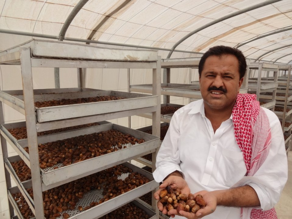Dates Dost Program: USAID's partner farm SME, (small and medium enterprise), Kaleemullah Dates Farm, Khairpur, is all set on the road to prosperity with the introduction of modern post harvest techniques and equipment such as solar tunnel dryers. The far