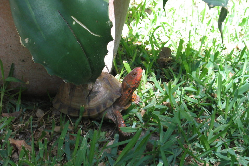 Uploaded by request of Sharon Highfield