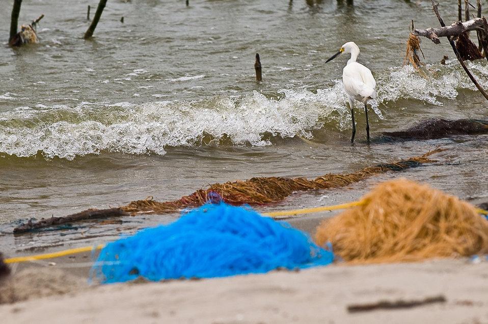 June 2, Oil absorbing 'pom poms' line beaches to