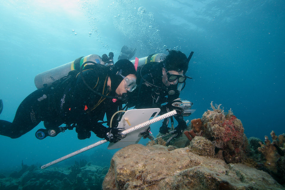 Studying Coral Health in St. Thomas, USVI
