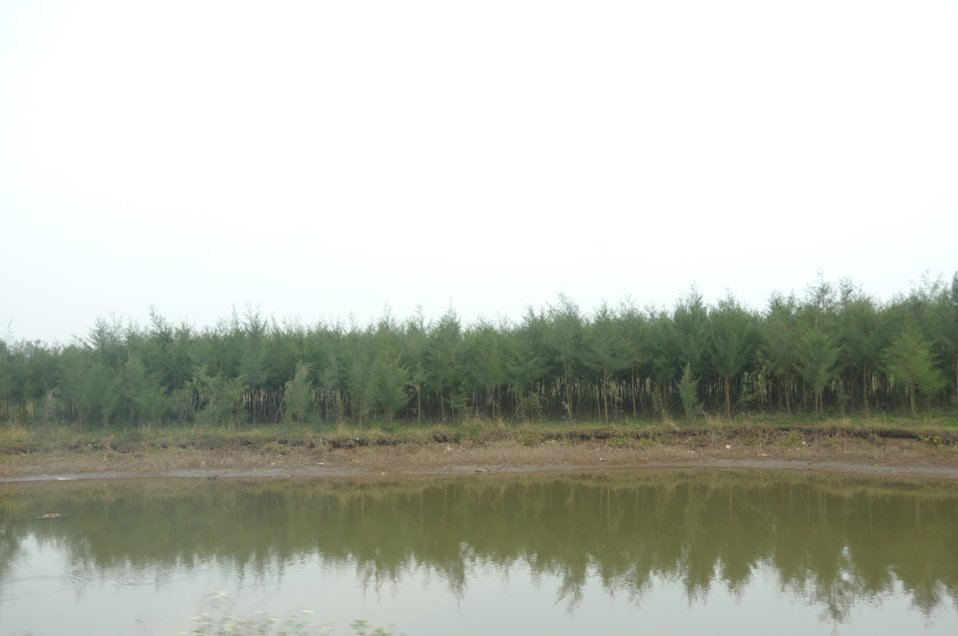 Coastal forests in Nam Dinh Province.