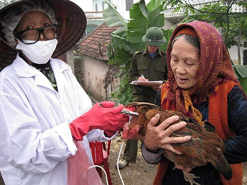USAID supports the Government of Vietnam's efforts to control avian influenza in Vietnam.