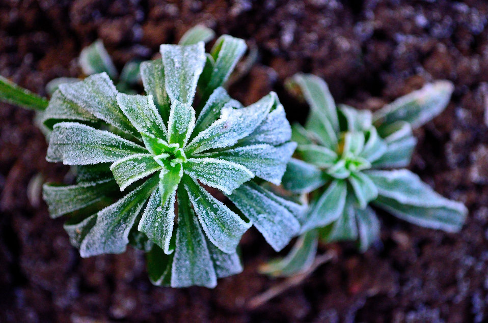 Winter frost on plants