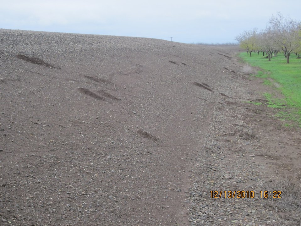 Rodent burrows in a Chico-area levee