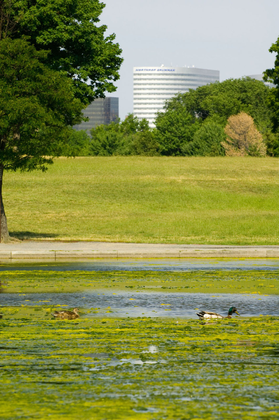 July 12, 2013 - DC Algal Bloom