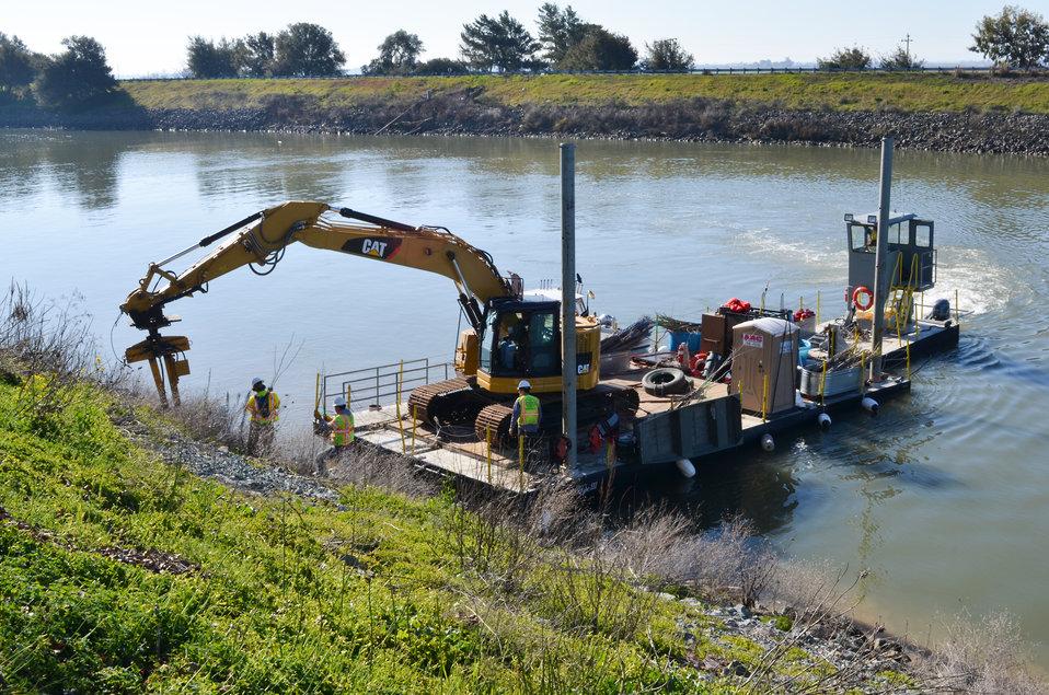 Planting willow poles along Sacramento River