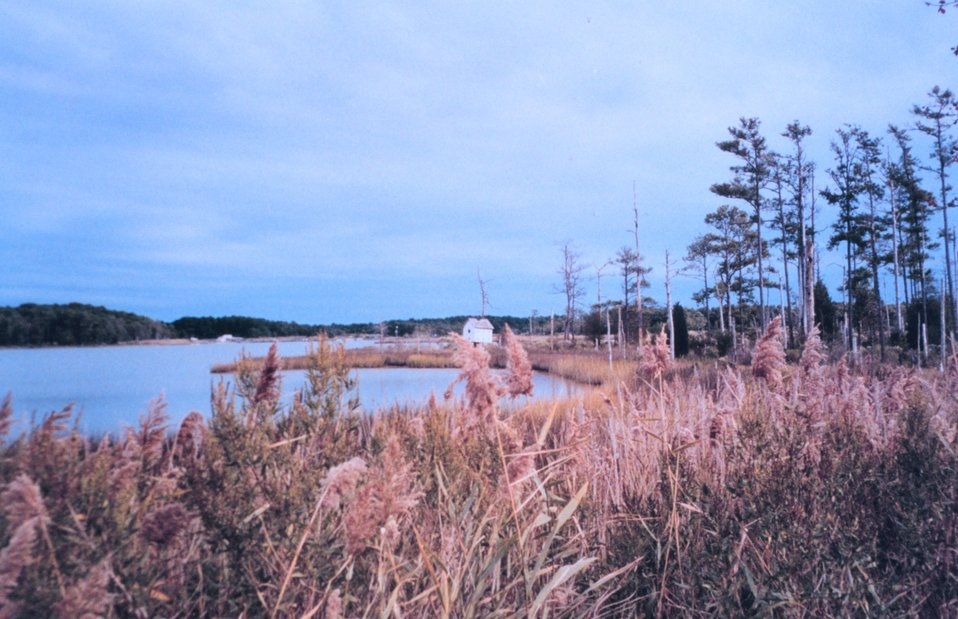 Marsh area behind Point Lookout State Park.