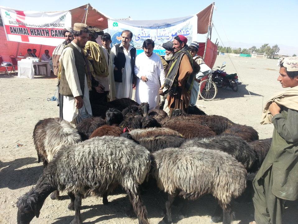 Livestock for sale