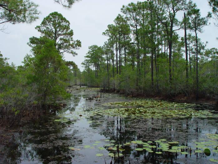 Alabama Wetlands, USFWS