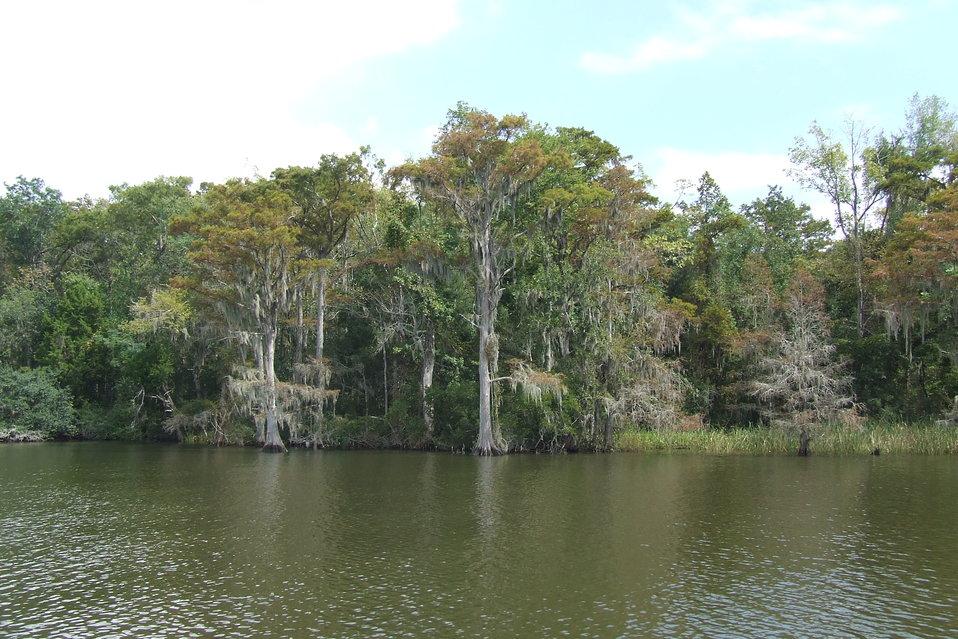 Delta landscape, Alabama