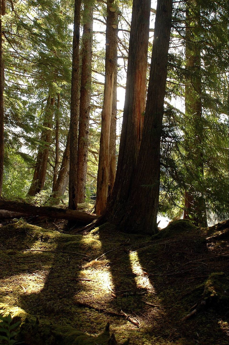 Oldgrowth TongassNF
